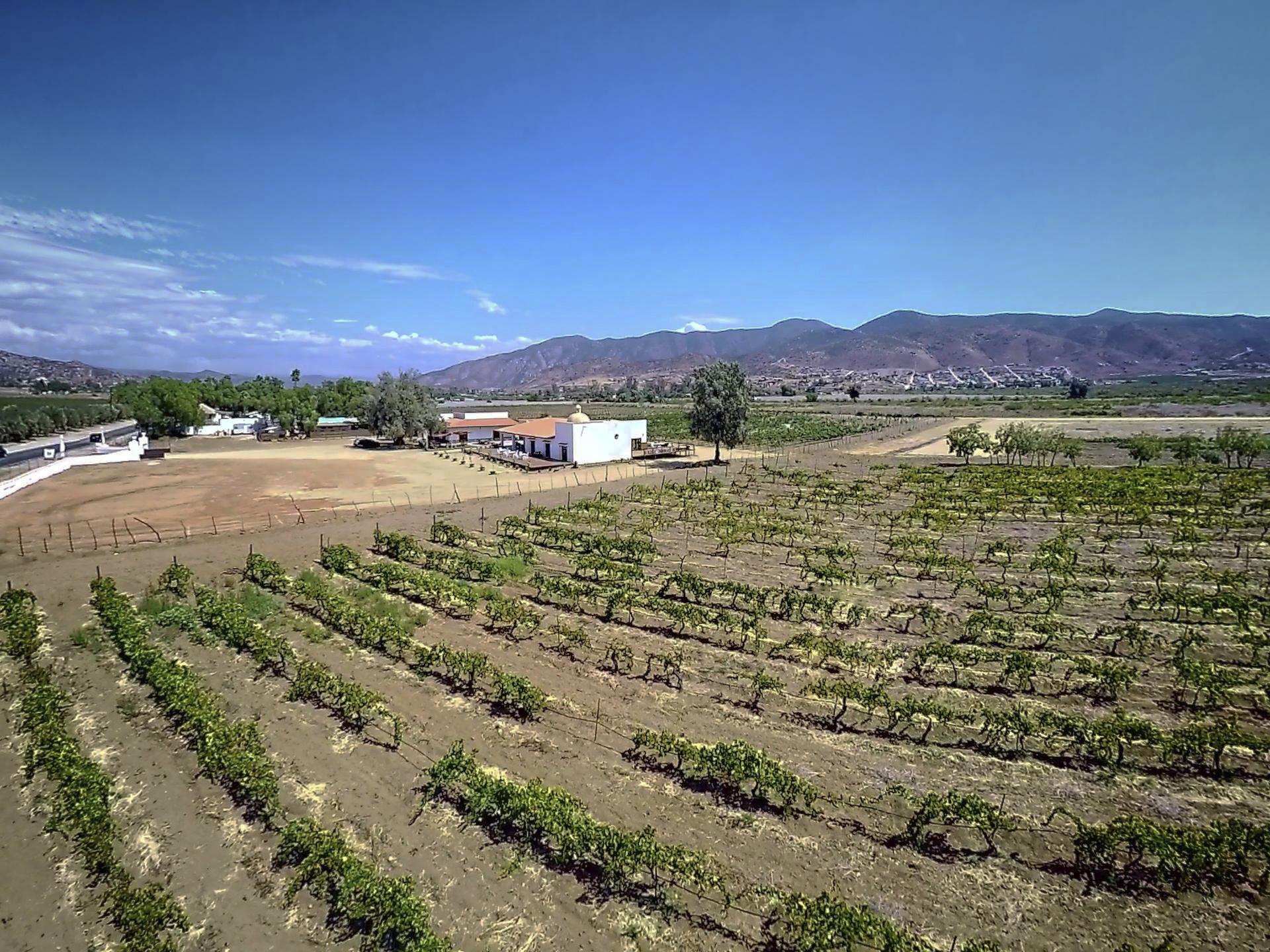 Bodegas Entrevez, La vinícola
